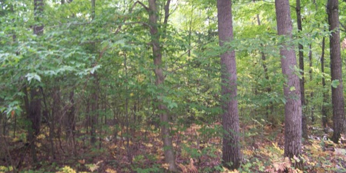 Lot 22 Governors Woods Tr